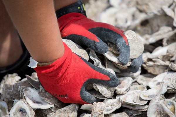 Oyster Reef Rebuild - Girl Scouts Project