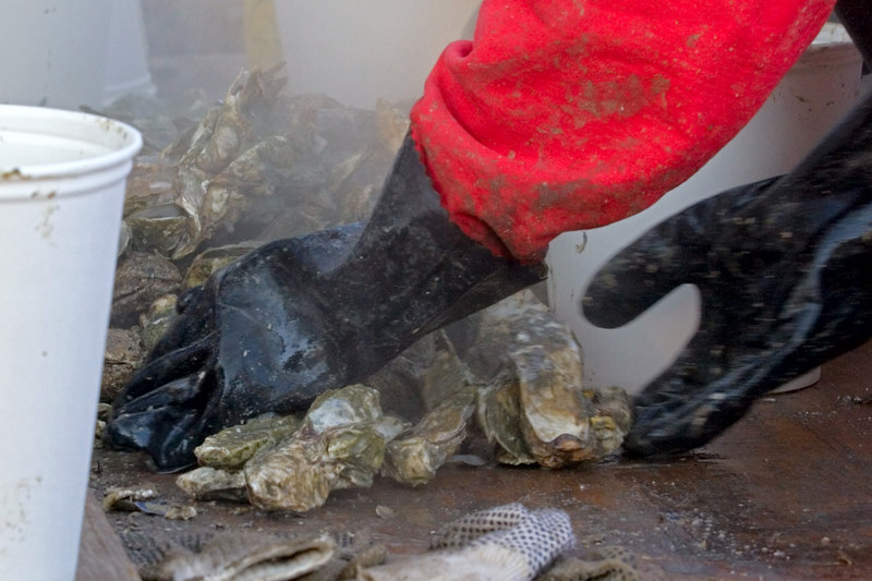 Gathering the steaming hot Oysters for the buckets.
