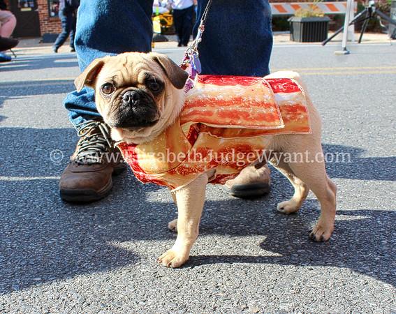 Pug PA Bacon Fest 2013