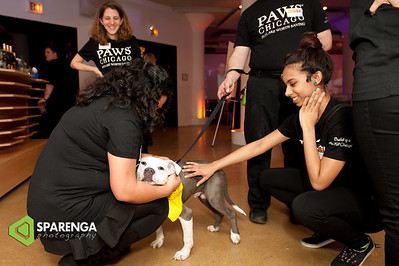 PAWS Chicago Animal Mag 2015