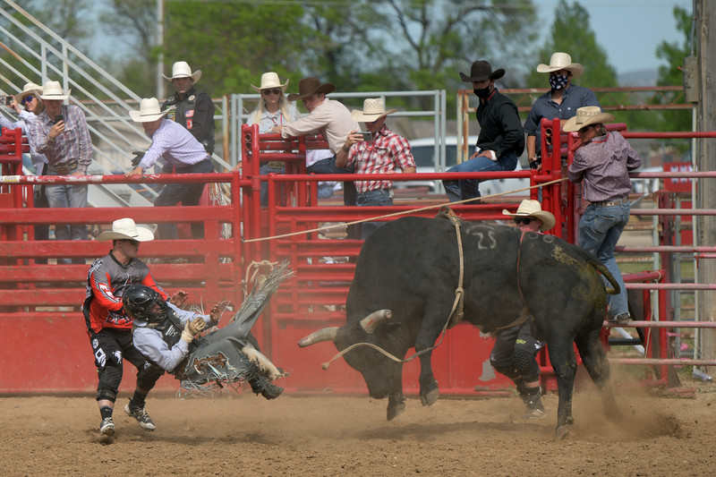 Matthew Gaston | The Sheridan Press<br>Hayden Harris, a bull rider from Tahlequah, Oklahoma, was no match for Zoolander at the PBR Forever West competition Saturday, May 30, 2020.