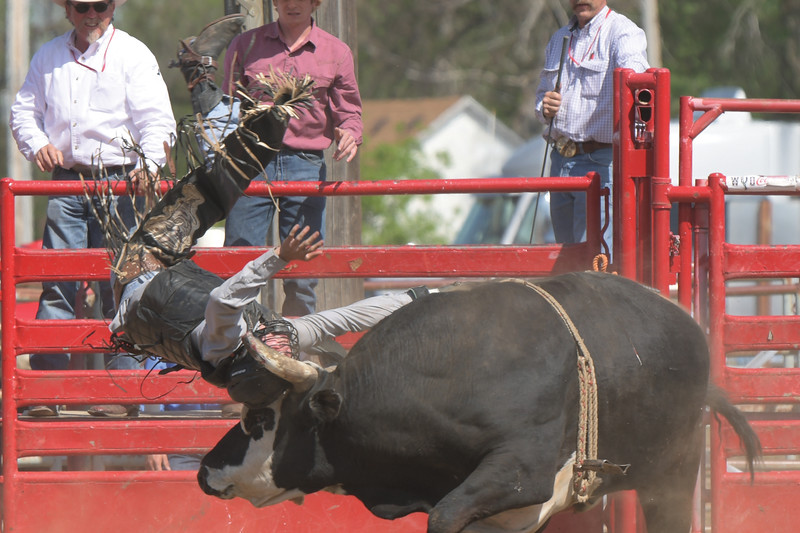 Matthew Gaston | The Sheridan Press<br>During his battle with Little Big Horn bull rider Cole Trivette faired no better than General Custer at the PBR Forever West competition Saturday, May 30, 2020.