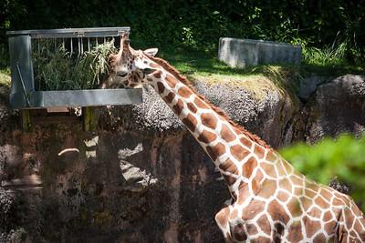 zoo-8332