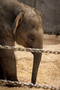 zoo-8305