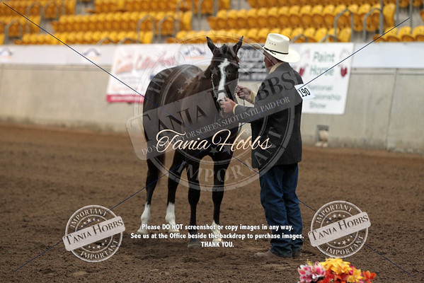 Wednesday Halter Showmanship