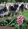 Guests enjoy the Morris Arboretum Moonlight and Roses Gala June 5, 2015.<br /> Bob Raines--Montgomery Media