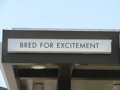 Bred for excitement  Just thought I'd take something out of context for a moment. It's a sign on a horse racing track entrance.