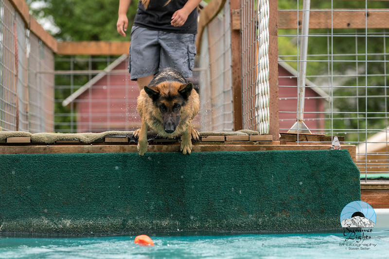 Making A Splash Dock Diving