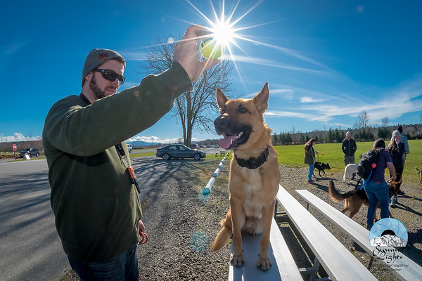 PNW German Shepherd Pack Seattle Pack Meet, March 3, 2018