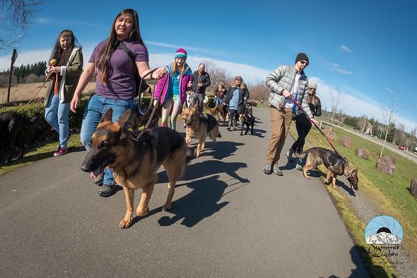 PNW German Shepherd Pack Seattle Pack Meet, March 3, 2018