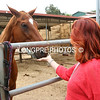 Cheri Poe giving loves to nice horse.