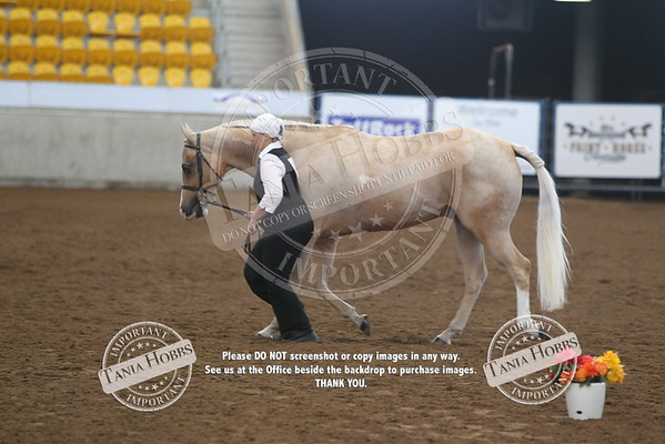 26	Senior Horse Hunter In Hand