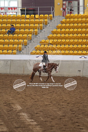 37	Senior Horse Amateur Hunter Under Saddle