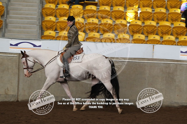 40	Senior Horse Hunter Under Saddle