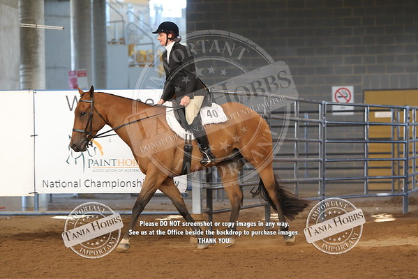 41	Paint Bred Hunter Under Saddle