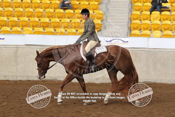 42	Amateur Paint Bred Hunter Under Saddle