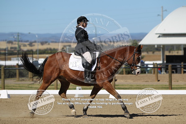 6 Paint Bred Dressage 2B