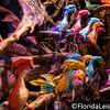 Pandora, Animal Kingdom, Walt Disney World, Orlando, 25th May 2017 (Photographer: Nigel G Worrall)