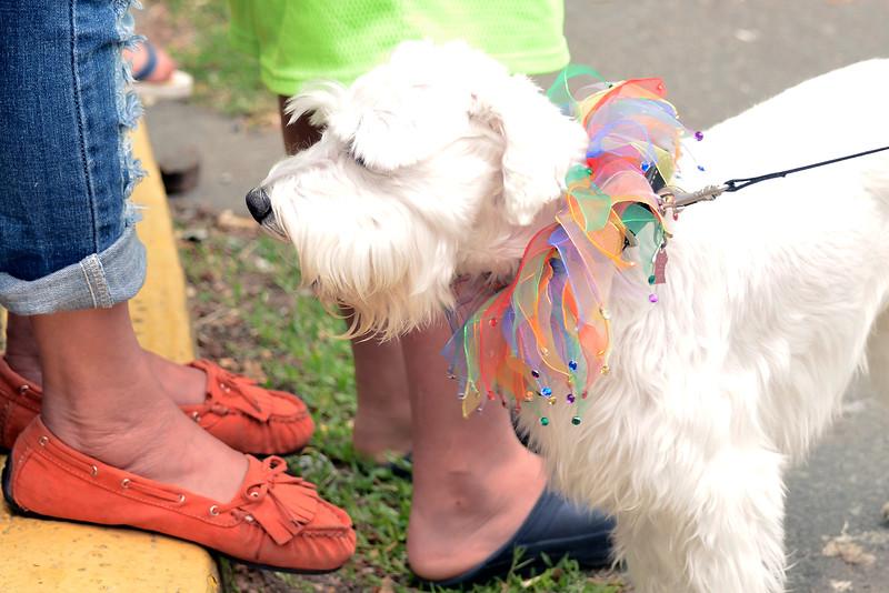 2015 YYJ Pride Parade