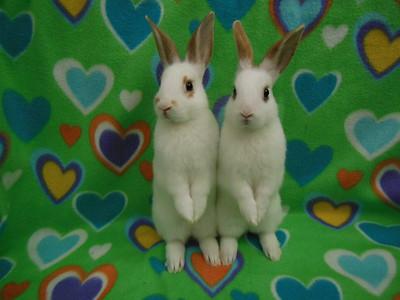 2 standing bunnies