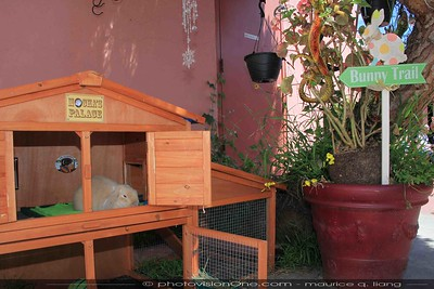The bunny trail leads to Mocha's Palace.