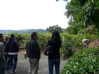 Napa Valley Fall 2008-22.jpg