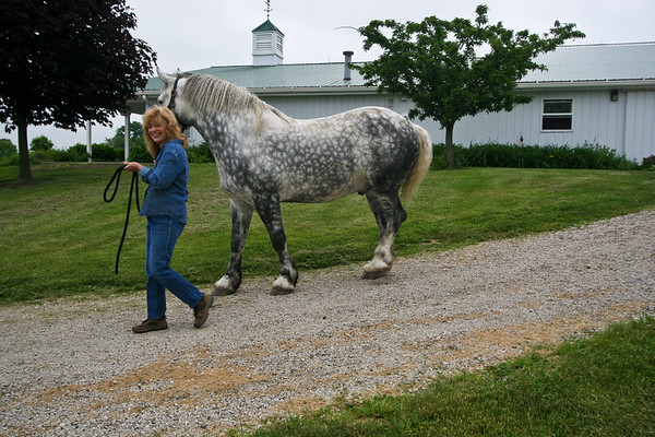 Pegasus Farm