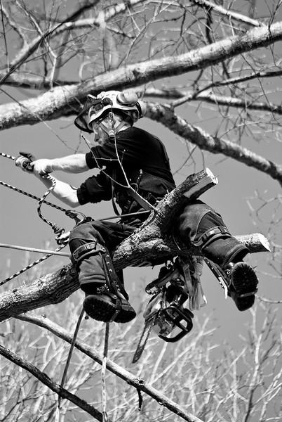 Ira Friedrichs, owner of Smart Feller Tree Works LLC, working on a tree removal job.