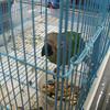 <b>Pet Amnesty Day, January 14, 2012</b>