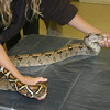 <b>Pet Amnesty Day, January 14, 2012</b> Snake stretch