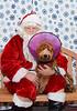 Santa-Paws-2-3pm-Dec-6-107