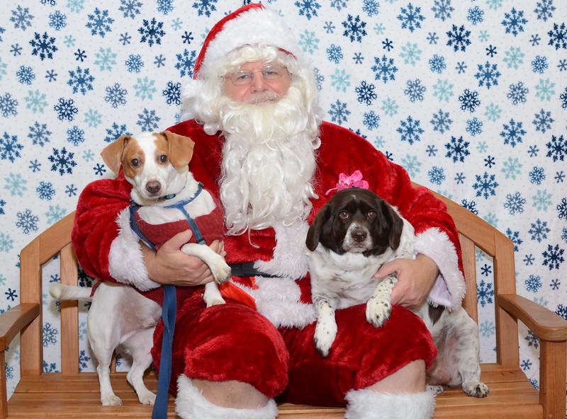 Santa-Paws-2-3pm-Dec-6-105