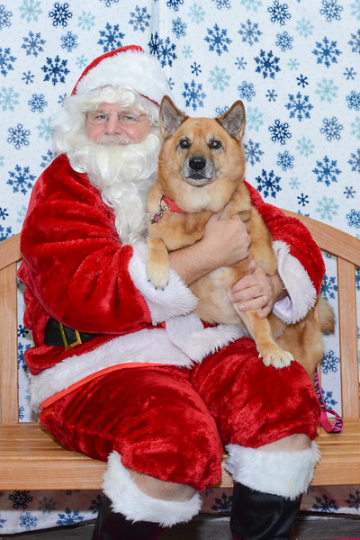 Santa-Paws-2-3pm-Dec-6-108