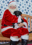 Santa-Paws-2-3pm-Dec-6-103