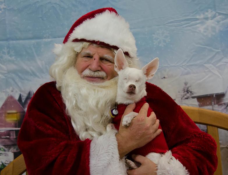 Santa-Paws-2017-Day-1-Saturday-Dec-2nd-217