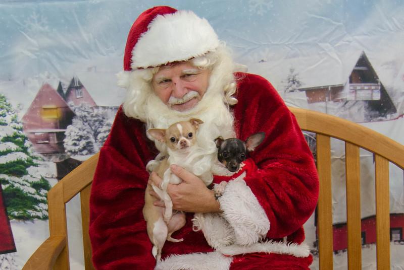 Santa-Paws-2017-Day-1-Saturday-Dec-2nd-249