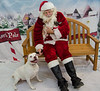 Santa-Paws-2017-Day-1-Saturday-Dec-2nd-248
