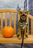 HSHV-Halloween-Pet-Supplies-Plus-150