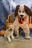 HSHV-Halloween-Pet-Supplies-Plus-154