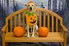 HSHV-Halloween-Pet-Supplies-Plus-153