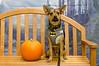 HSHV-Halloween-Pet-Supplies-Plus-149