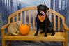 HSHV-Halloween-Pet-Supplies-Plus-151