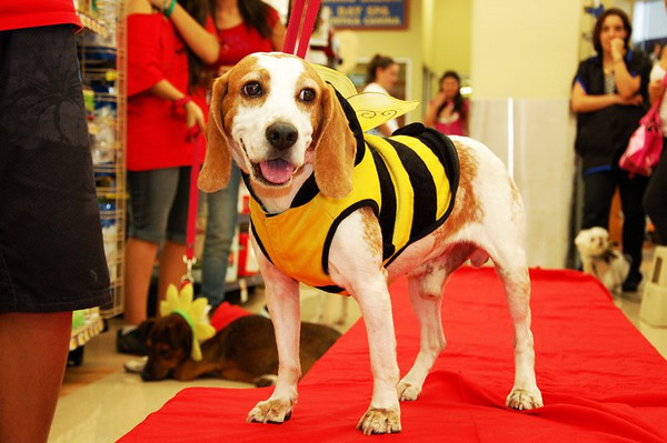 Petco South Beach Howl-o-ween Costume Pawty