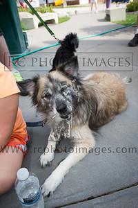 024_KCHS Doggie Jog 092814_3476-2