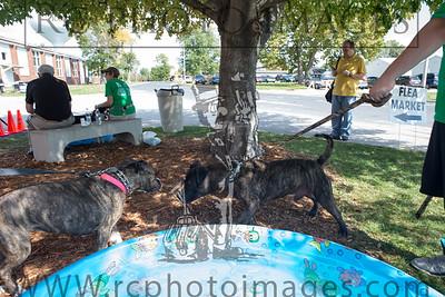 009_KCHS Doggie Jog 092814_3447-2