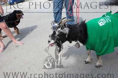 015_KCHS Doggie Jog 092814_3466-2