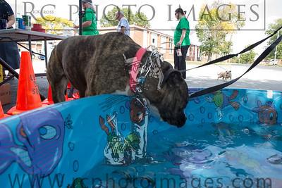 008_KCHS Doggie Jog 092814_3446-2