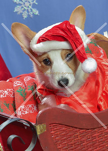 PetValu Christmas 2015