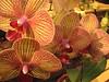 Philadelphia Flower Show 2007 : Mom & I waded through the show, 2007
