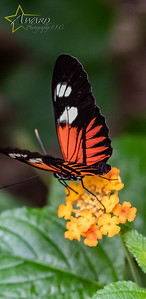 20180808 108 Philadelphia Insectarium and Butterfly Pavilion